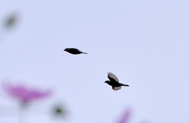 鳥クイズの正解はスズメ