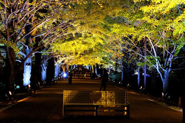 銀杏並木ハートのベンチ