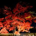 Photos: 日本庭園1