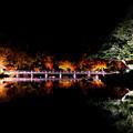 Photos: 日本庭園8