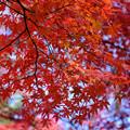 Photos: 赤い
