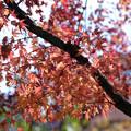 Photos: まだ紅葉が