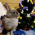 Photos: クリスマスポロリ