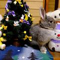 クリスマスポロリ2