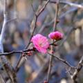 咲き始め2