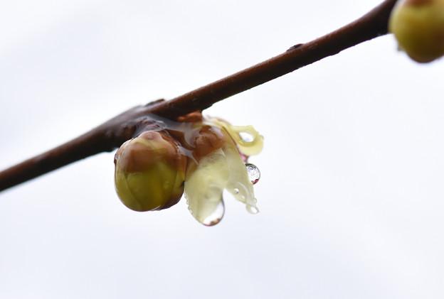 Photos: まんまる水滴