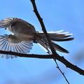 Photos: 光をすかせて飛ぶ