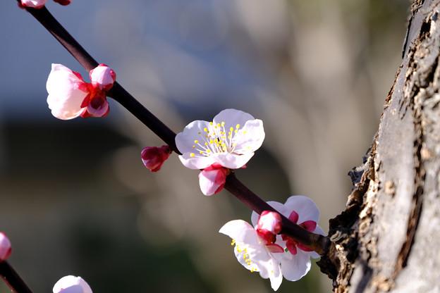 早春の喜び