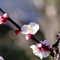 Photos: 早春の喜び