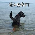 Photos: 花初泳ぎ