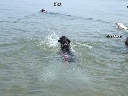 花初泳ぎ1