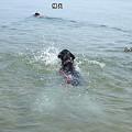 Photos: 花初泳ぎ1