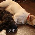 Photos: 紫音ちゃんのうで枕でスヤスヤ