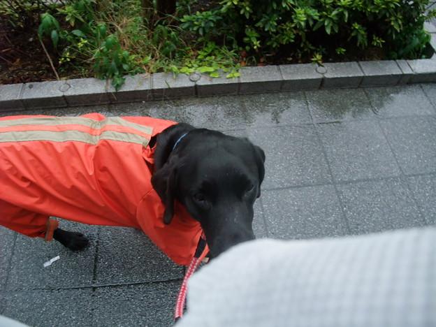 Photos: 雨でも散歩