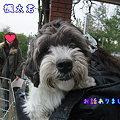 Photos: 楓太