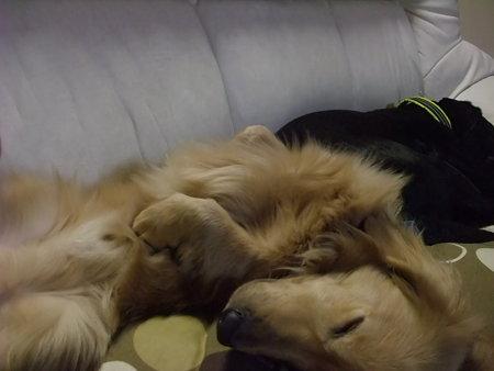 くつろいで寝れるようになったエース