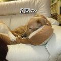 Photos: 2匹~