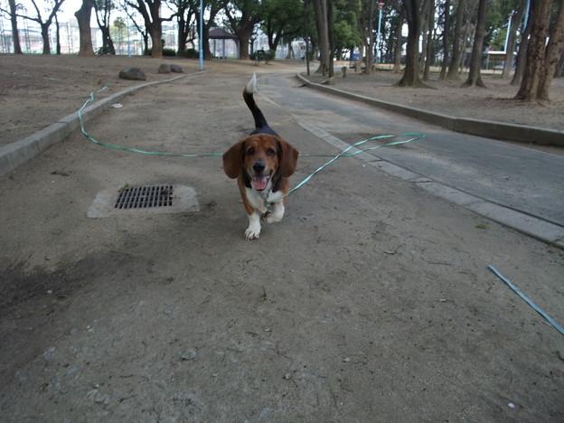 Photos: ボール遊び大好きです