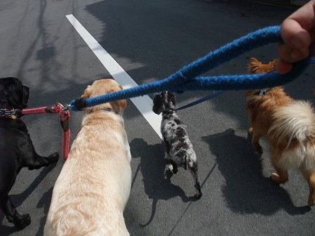 4頭での散歩