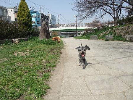 私が走れば走る春馬