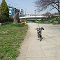 Photos: 私が走れば走る春馬