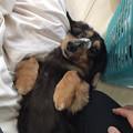 写真: 保護犬のバロン