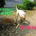 Photos: タッキーと4