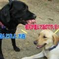 Photos: タッキーと5