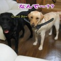 Photos: 紫音11