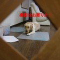 Photos: 待機中