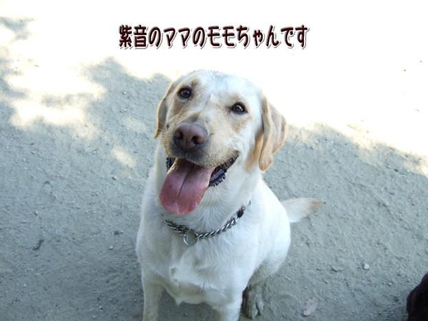 Photos: モモちゃん