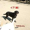 Photos: イブ