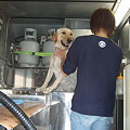 Photos: 犬の床屋