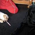Photos: 仔犬にビビって斜めな悟天