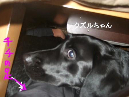 Photos: クズルちゃんもこたつ好き^^