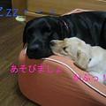 Photos: あそぼ♪