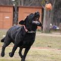 Photos: ボール追う
