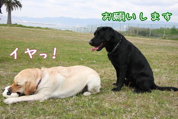 Photos: イヤっ!