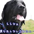 Photos: モテたい・・・