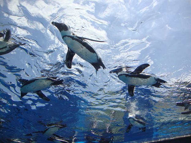 天空のペンギン