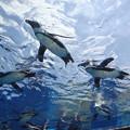 写真: 天空のペンギン