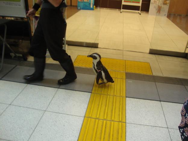 品川駅舎を歩くモモくん