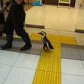写真: 品川駅舎を歩くモモくん