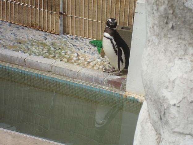 池田zooにて