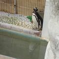 Photos: 池田zooにて