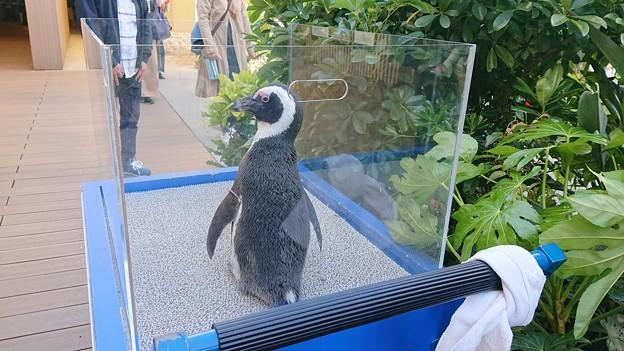ペンギンの後ろ姿