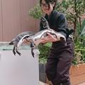 Photos: ペンギンピックアップ