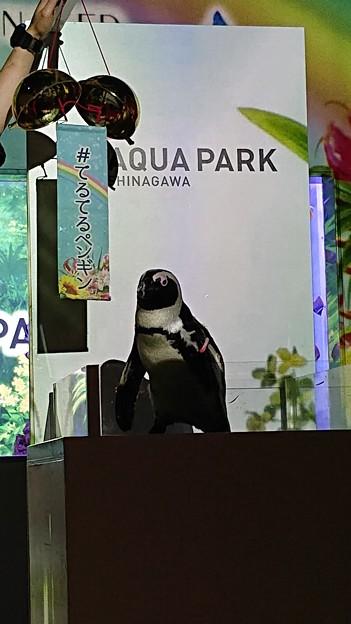てるてるペンギン