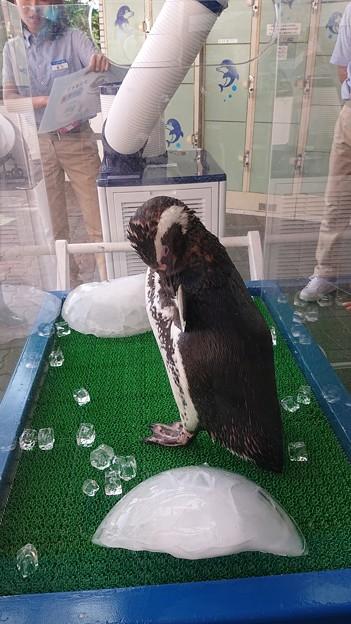 ペンギンのお出迎え