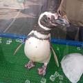 Photos: お出迎えペンギン2